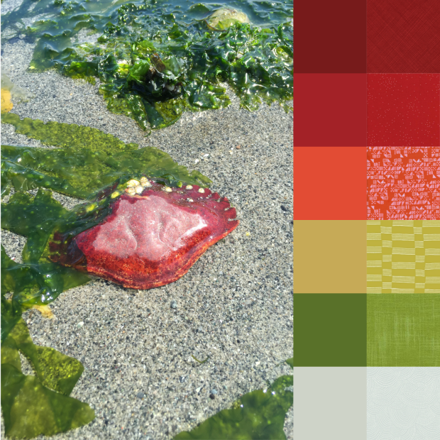 Crab Shell Palette and Bundle.png